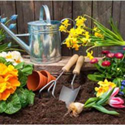 تصاویر استوک از باغبانی