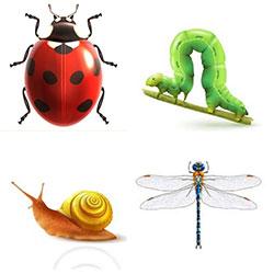 دانلود مجموعه وکتور حشرات