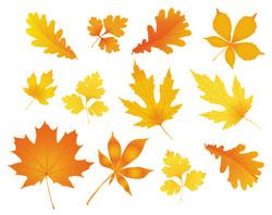 دانلود وکتور برگهای پاییزی