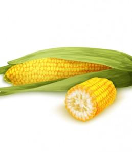 Corn stalk isolated