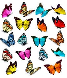 Various-beautiful-butterflies-vector-material