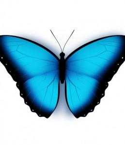 butterfly-psd