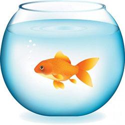 دانلود وکتور ماهی طلایی در تنگ آب