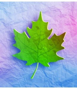 maple_leaf_on_grunge_paper_6814278