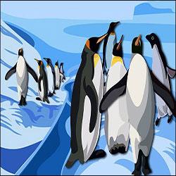 دانلود فایل لایه باز پنگوئن های زیبا