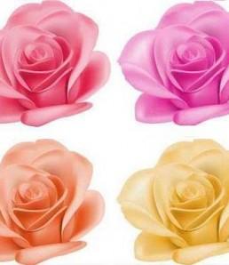 دانلود وکتور مجموعه گل رز